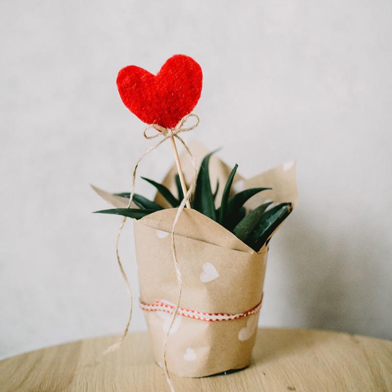 сердечко в горшочке подарок любимой на день святого валентина
